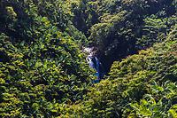 A waterfall surrounded by palm and flame trees along the Hamakua coast of the Big Island of Hawai'i.