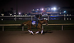 HALLANDALE BEACH, FL - JAN 27: California Chrome, with exercise rider Dihigi Gladney gallops at Gulfstream Park Race Course on January 27, 2017 in Hallandale Beach, Florida. (Photo by Alex Evers/Eclipse Sportswire/Getty Images)