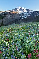 Mount Rainier and subalpine wildflower meadow, Paradise, Mount Rainier National Park, Washington