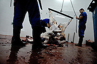 A dead body of a bull hung on hook in the slaughterhouse behind the bullring in Fuengirola, Spain, 28 April 2007.