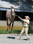September 08, 2014:Hip #22 Tapit - Leave Me Alone filly just before she went into the sales ring.  Consigned by Lane's End Sales she sold for $400,000 to Whisper Hill Farm at the Keeneland September Yearling Sale.  Candice Chavez/ESW/CSM