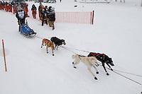 Cain Carter of Fairbanks leaves the start line of the 2009 Junior Iditarod on Knik Lake on Saturday Februrary 28, 2009.