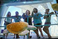 Kemp's ridley sea turtle (Endangered Species), Lepidochelys kempii (c) Texas State Aquarium, Corpus Christi, Texas