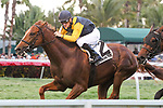 HALLANDALE BEACH, FL - APRIL 01:  #2 Sadlers Joy with Julien Leparoux riding gets the win in the Pan AMerican (G2T) on Florida Derby Day at Gulfstream Park, Hallandale Beach, FL. (Photo by Arron Haggart/Eclipse Sportswire/Getty Images)