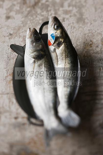 Europe/France/Bretagne/29/Finistère: Bar de Ligne - Stylisme : Valérie LHOMME //    France, Finistere,  line-caught sea bass
