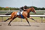 #88Fasig-Tipton Florida Sale,Under Tack Show. Palm Meadows Florida 03-23-2012 Arron Haggart/Eclipse Sportswire.