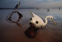 A hunter dons a hollowed out body of a bird wearing it as a headress and mask and lowers his body into the water. He wiggles his head back and forth to lure other birds into his net.