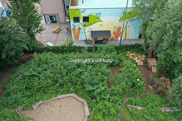 Foto: VidiPhoto<br /> <br /> UTRECHT – Daan Bleichrodt van natuurorganisatie IVN bij het Tiny Forest de Cremertuin in Utrecht. De IVN'er introduceerde het Indiase bedenksel enkele jaren geleden in Nederland. Inmiddels zijn er zo'n 35 minibossen in Nederland, waarvan vier in achtertuinen bij particulieren. De Cremertuin in Utrecht is een speelplek voor kinderen en tevens moestuin voor de buurt. De Tiny Forest heeft de wat verpieterde groene oase in de stad weer nieuw leven in geblazen. Minibossen zorgen voor verkoeling, waterberging en CO2-reductie.