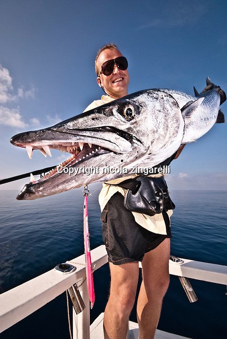November 2008, the Maldives. Fisherman in his 40s holding a very large Barracuda caught on a jig in the waters of the Indian Ocean. Vertical