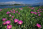 .Vrnik island near Korcula. .Cruise in Croatia. Island of Dalmatia