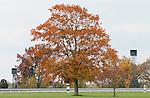 Scenic Keeneland Fall.  October 20, 2012.