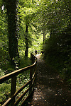 Glenariff Forest Park contains dozens of hiking trails including the Waterfall Trail along the Glenariff River.  County Antrim, Northern Ireland