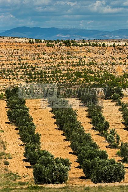 Europe, Espagne, Navarre, env d'Arguedas: Parc Naturel des Bardenas Reales, secteur d'El Plano, terres irriguées dans le désert, oliveraie // Spain, Navarre, near Arguedas: Bardenas Reales Natural Park, El Plano aera, irrigated land in the desert , olive grove