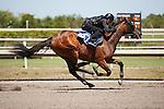 #153Fasig-Tipton Florida Sale,Under Tack Show. Palm Meadows Florida 03-23-2012 Arron Haggart/Eclipse Sportswire.