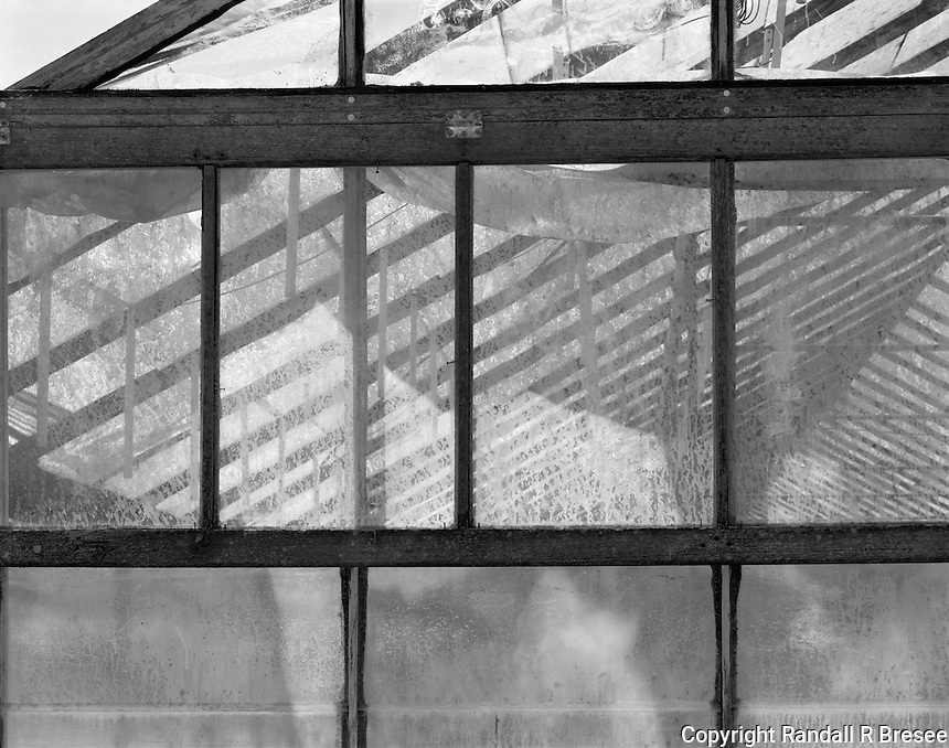 """""""Ceiling Supports"""" <br /> Gibson Greenhouses, Maryville, Tennessee<br /> <br /> Light streamed through the greenhouse roof to illuminate plants in this black and white photograph."""