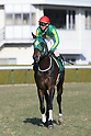 Horse Racing: Kisaragi Sho (NHK Sho) at Kyoto Racecourse