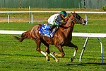 OCT 03, 2020 : Channel Maker with Manuel Franco aboard, wins the Grade 1 Joe Hirsch Turf Classic Stakes, for 3-year old & up, going 1 1/2 miles on the turf, at Belmont Park, Elmont, NY.  Sue Kawczynski/Eclipse Sportswire/CSM
