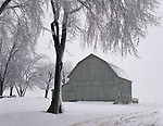 Putnam County, IL<br /> Ice coated trees and weathered barn
