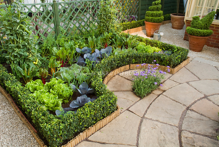 Growing vegetables on the patio in backyard: beans, tomato, rainbow chard, lettuce salad greens, boxwood, lattice fence, herbs, topiary shrub evergreens in containers, next to house, eatly edged with bamboo