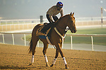 DUBAI,UNITED ARAB EMIRATES-MARCH 29: Mind Your Biscuit,trained by Chad Brown,exercises in preparation for the Dubai Golden Shaheen at Meydan Racecourse on March 29,2018 in Dubai,United Arab Emirates (Photo by Kaz Ishida/Eclipse Sportswire/Getty Images)
