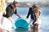 San Diego CA, USA.  7th, December 2015:  Mission Bay High School Seniors Alina Snyder and Pearl Moore release juvenile white sea bass into Mission Bay near Crown Point.  The school is one of the first schools in the state to participate in the Seabass in the Classroom Project, which is a collaboration between Hubbs-Sea World Research Institute and the California Department of Fish and Game.