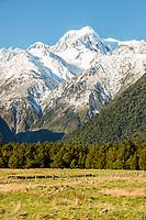 Winter morning on farmland near Fox Glacier with views of Mt. Tasman of Southern Alps, Westland National Park, West Coast, World Heritage Area, South Westland, New Zealand