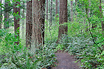 """Hiking trail winds through lush forest land.  """"Portland's Secret Garden"""",  Leach Garden was established by JOhn and Lilla Leach in the 1930's.  The Garden continues as a public place of respite and native northewest botanical display.  Operated by the city of Portland, Oregon.."""