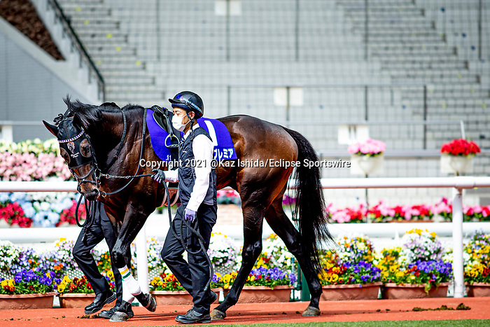 TAKARAZUKA,JAPAN-MAY 2: World Premiere walks on the padock with no spectator stands for the background before the Tenno Sho (spring) at Hanshin Racecourse on May 2,2021 in Takarazuka,Hyogo,Japan. Kaz Ishida/Eclipse Sportswire/CSM