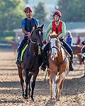 LOUISVILLE, KENTUCKY - MAY 01: McCraken, owned by Whitham Thoroughbreds LLC and trained by  Ian R. Wilkes, exercises in preparation for the Kentucky Derby  at Churchill Downs on May 1, 2017 in Louisville, Kentucky. (Photo by Jesse Caris/Eclipse Sportswire/Getty Images)