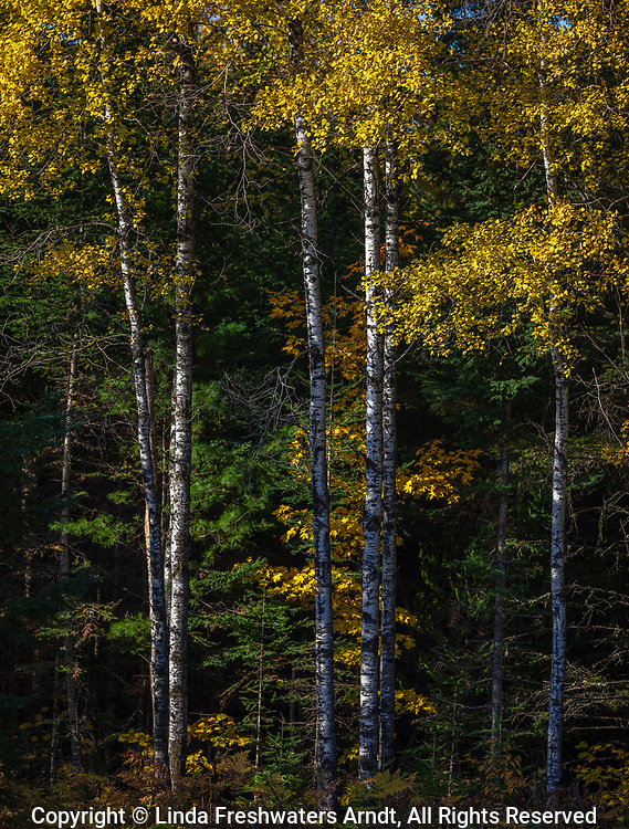 A pretty autumn morning in the Chequamegon National Forest.