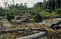 CAMBODIA, Mekong region, Stung Treng, logging of rainforest, cleared and burned forest