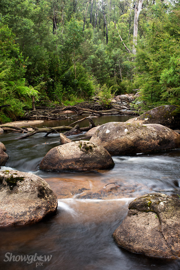 Image Ref: W033<br /> Location: Murrindindi Scenic Reserve<br /> Date: 04 Jan 2015