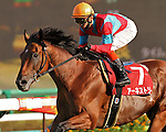Breeders' Cup Challenge winner, Earnestly, wins his fall debut in the G2 Sankei Sho All Comers (G2) at Nakayama Racecourse on September 25th, 2011.