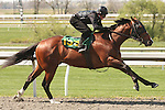 07 April 2011.  Hip #155 LIBERTY BOUND  Mr. Greeley - Hello Liberty colt, consigned by Niall Brennan.