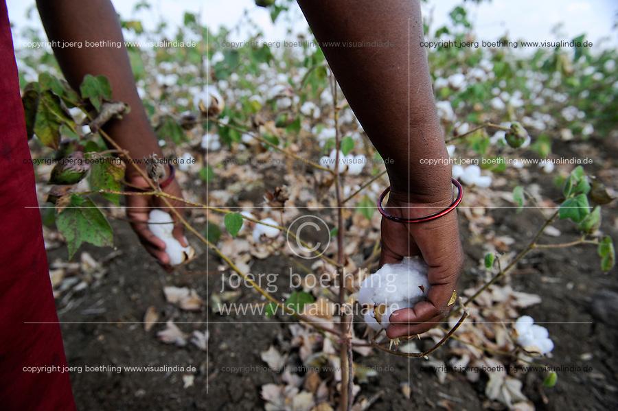 INDIA Maharashtra, cotton farming in Vidarbha region , women harvest Bt-(bacillus thuringiensis) cotton , the gene modified sort Bollgard of Monsanto India , Vidarbha has a high rate of farmer suicide due to debt , crop failure and drought / INDIEN Maharashtra, Frauen ernten BT- (bacillus thuringiensis) Baumwolle , genveraenderte Sorte Bollgard des Konzern Monsanto  , Region Vidarbha hat eine enorm hohe Rate von Bauernselbstmorde durch hohe Verschuldung fuer Saatgut Pestizide und Duenger und durch Ernteausfaelle wegen Duerre und Wassermangel