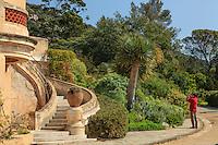 Le Domaine du Rayol:<br /> escalier menant à la terrasse de l'Hôtel de la Mer et le jardin des Canaries dominé par 2 dragonniers (Dracaena draco).