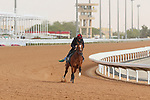 RIYADH, SA February 19 2021: ROYAL DORNOCH (IRE)  Track work from King Abddulaziz Racetrack, Riyadh, Saudi Arabia. Shamela Hanley/Eclipse Sportswire/CSM FEBRUARY 19 2021: The Saudi Cup Preparations.