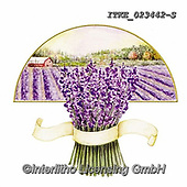 Isabella, FLOWERS, BLUMEN, FLORES, paintings+++++,ITKE023442-S,#f#, EVERYDAY