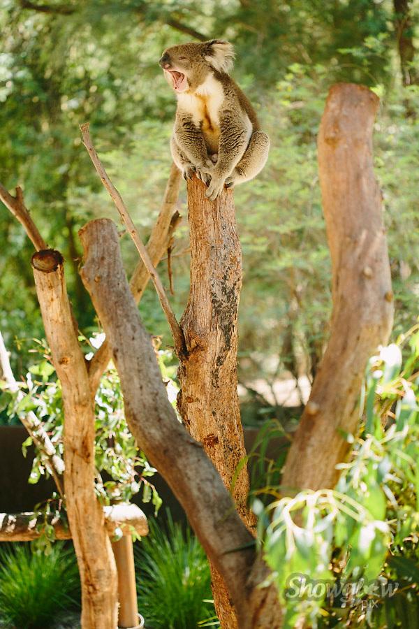 Image Ref: YR167<br /> Location: Healesville Sanctuary, Healesville<br /> Date: 29.01.17