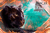 Sandi, REALISTIC ANIMALS, REALISTISCHE TIERE, ANIMALES REALISTICOS, paintings+++++copperjaguar,USSN22,#a#, EVERYDAY ,puzzles