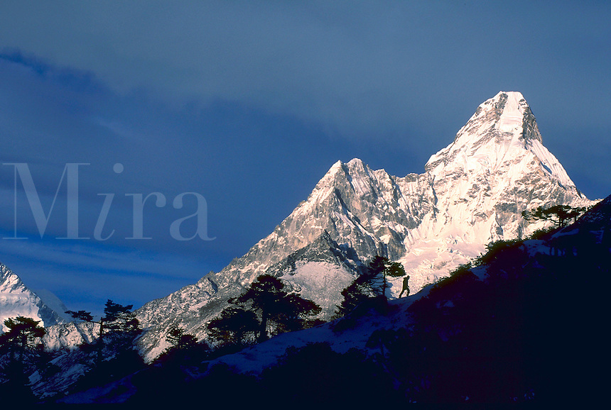 Climber and trees silhouetted in front of Ama Dablam, a mountain in the Mount Everest region, Khumbu Himalaya, Nepal.<br />