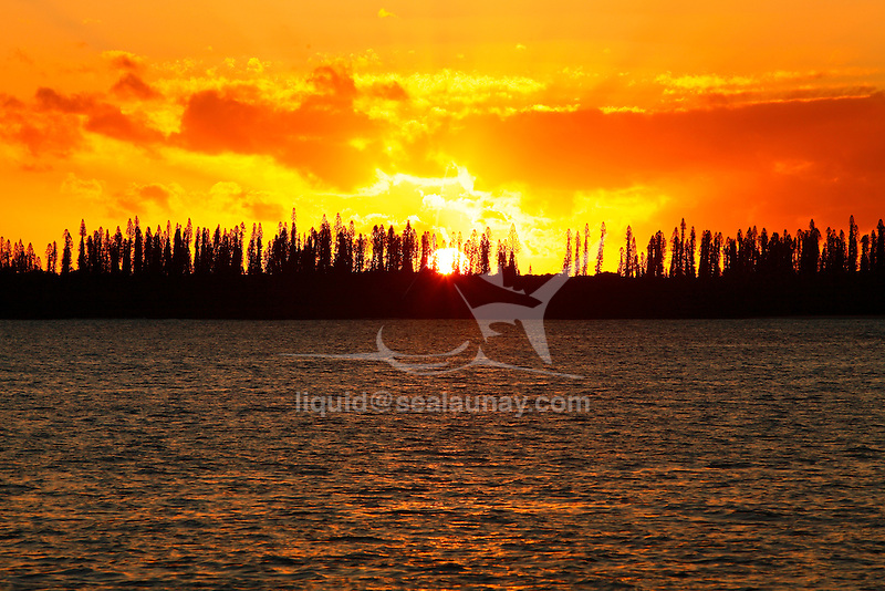 """Sunset over the Uenanavo headland cover from the iconic tall native pines (Araucaria columnaris) at the Isle of Pines, New Caledonia..The Isle of Pines (French: Île des Pins; Kanak name: Kunyié) is an island located in the Pacific Ocean, in the archipelago of New Caledonia, an overseas territory of France. The island is part of the commune (municipality) of L'Île-des-Pins, in the South Province of New Caledonia. The Isle of Pines is often nicknamed l'île la plus proche du paradis (""""the closest island to Paradise"""") and is famous for snorkeling and scuba diving in and around its colorful lagoon. Many species of tropical fish and corals can be seen in the transparent water..The island is located around [show location on an interactive map] 22°37?S 167°29?E / 22.617°S 167.483°E / -22.617; 167.483Coordinates: 22°37?S 167°29?E / 22.617°S 167.483°E / -22.617; 167.483 and measures 15 km (9 miles) by 13 km (8 miles). It lies southeast of Grande Terre, New Caledonia's main island and is approximately 100 kilometres south-east of the capital Noumea. There is one airport (code ILP) with a 1,097-meter (3,600 ft) runway. The Isle of Pines is surrounded by the New Caledonia Barrier Reef..The inhabitants of the island are mainly native Melanesian Kanaks and the population is approximately 2,000 (estimated 2006) (1989 population 1,465)..The island is rich with animal life and is home to many unique creatures such as the Crested Gecko Rhacodactylus ciliatus and the world's largest gecko Rhacodactylus leachianus..The pic Nga is the island's highest point, at 262 meters (860 ft) elevation..The island was first discovered by Captain James Cook in 1774 on his second voyage to New Zealand. Captain Cook gave the island its name after seeing the tall native pines (Araucaria columnaris). It is said he never actually disembarked onto the island but as he saw signs of inhabitance (smoke) assumed it was inhabited. In the 1840s both Protestant and Catholic missionaries arrived, along with mercha"""