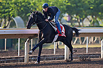 SHA TIN,HONG KONG-DECEMBER 09: Elliptique,trained by Andre Fabre,exercises in preparation for the Hong Kong Cup at Sha Tin Racecourse on December 9,2016 in Sha Tin,New Territories,Hong Kong (Photo by Kaz Ishida/Eclipse Sportswire/Getty Images)