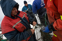 4)The life in Faskrudsfjordur is all about fish. The fishermen need to mend their nets.