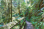 Rainforest Traill, Olympic National Forest,  Olympic Penninsula, Washington.  Outdoor Adventure.