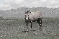 Wild Mustang at the Black Hills Wild Horse Sanctuary south Dakota