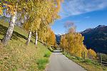 Austria, East-Tyrol, near Lienz: rural road and autumn scenery above Iselsberg | Oesterreich, Osttirol, bei Lienz: Landstrasse in Herbstlandschaft oberhalb Iselsberg