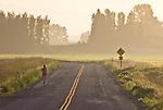Skagit Valley, woman jogging, Fir Island, farmland, farms, sunrise, Skagit County, Washington State,