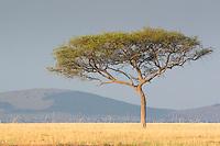Kenya Scenic Tree Landscape  Kenya 2015