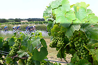 10th July 2021; Carcassonne, France;  The peloton passing through a vineyard during stage 14 of the 108th edition of the 2021 Tour de France cycling race, a stage of 183,7 kms between Carcassonne and Quillan.